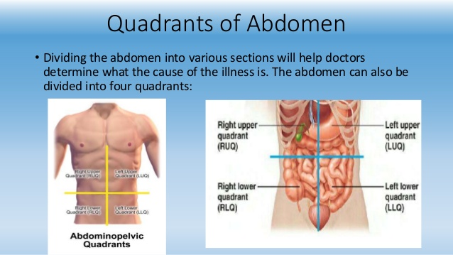 9-region-of-abdomen-6-638