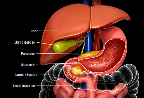 493ss_getty_rf_gallbladder_anatomy_illustration